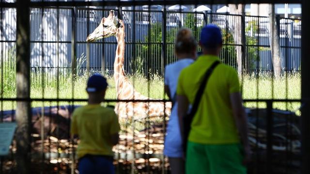 Зоопарк Калининграда с 22 июня закроет вход с улицы Чайковского