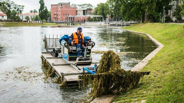 Водоросли режут, кувшинки оставляют: как с помощью машины-амфибии чистят озеро Поплавок (фото)