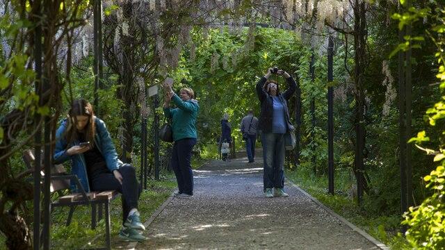 Ботанический сад в Калининграде закроют на шесть дней, чтобы выдать выпускникам БФУ дипломы
