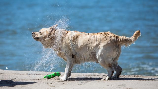 Кинолог назвал пять самых обучаемых пород собак
