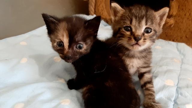 Шесть котят за четыре дня без воды и еды добрались на фуре в Калининград из Москвы
