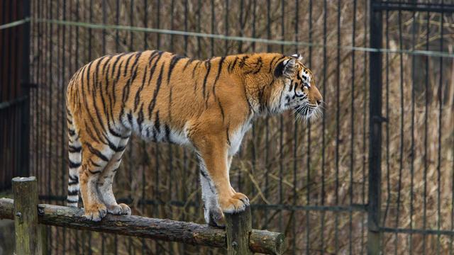 Калининградский зоопарк переходит на осеннее расписание