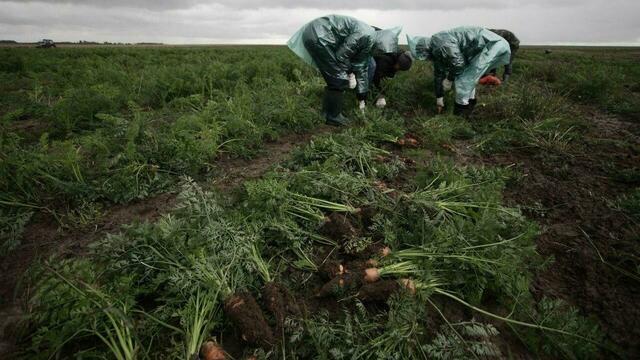 Эксперт перечислил продукты, накапливающие больше всего пестицидов