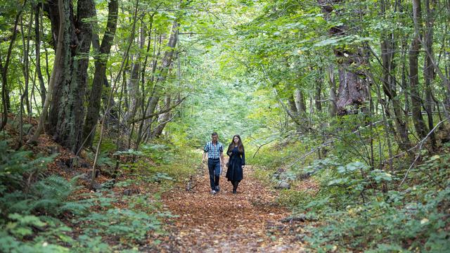 Казаки-разбойники, первая любовь и вековые деревья: чем дорог калининградцам Суздальский лес