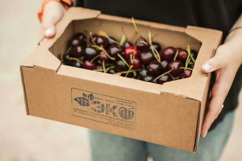 Голубика, малина, клубника: где в Калининградской области выращивают ягоды и как их продают - Новости Калининграда