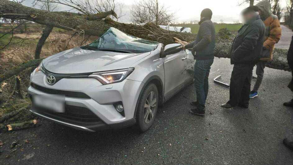 В Гурьевском районе дерево упало на легковушку, в салоне были женщина и ребёнок - Новости Калининграда   Фото: очевидец