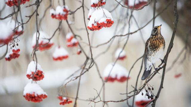 Климатолог рассказал, какими будут январь и февраль в Калининграде