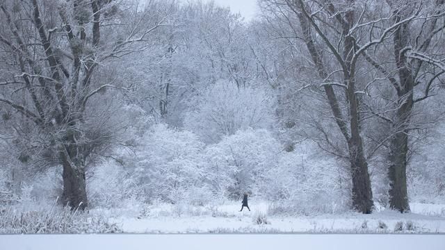 Сугробы, снеговики, синицы: зимний фоторепортаж