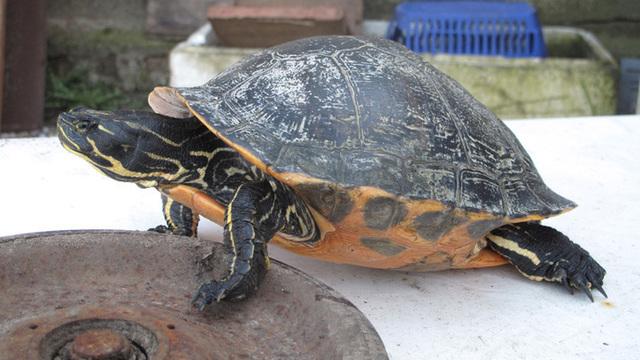В американском зоопарке кролик проиграл забег черепахе (видео)