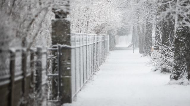 Снежный Калининград в четверг (фото)