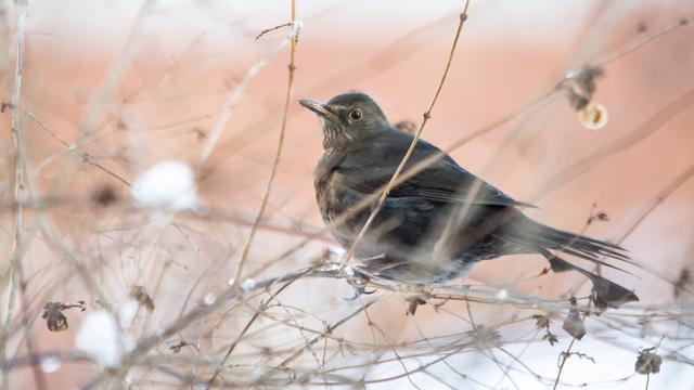 Фото дня: что за птица?