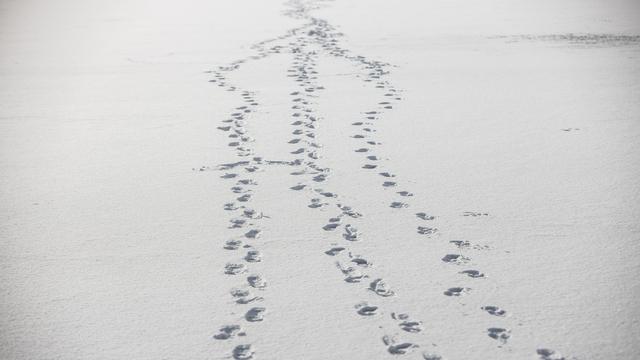 Фото дня: куда ведут следы?