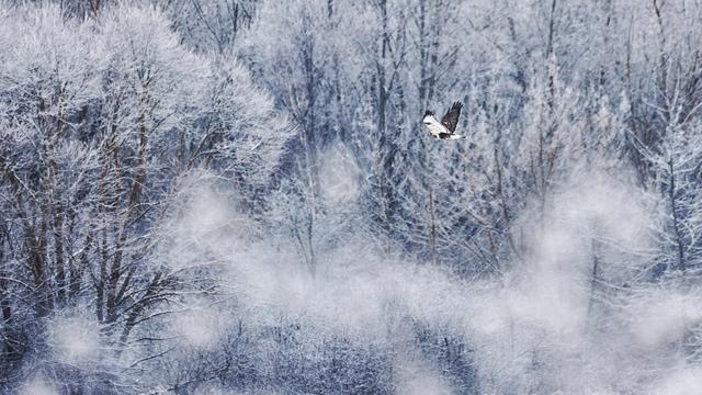 Фото дня: зима на Виштынецком озере