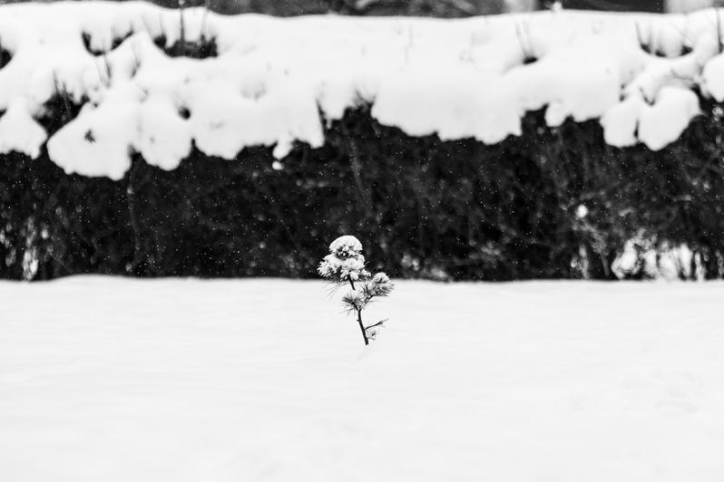 "Кругом бело: про зиму в ч/б фотографиях - Новости Калининграда   Александр Подгорчук / ""Клопс"""