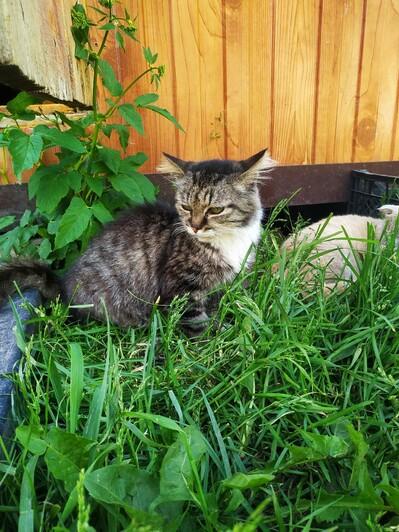 Когда хозяйка Кончиты умерла, наследники отнесли старую кошку на помойку | Фото предоставила Анна Брылевская