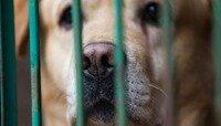 Житель Светлогорска повесил двух своих собак из-за конфликта с соседями