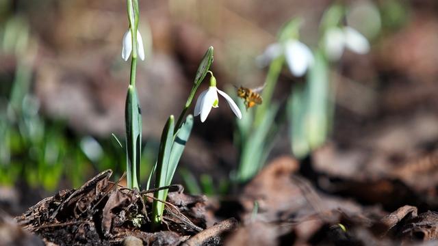 Синоптики: весна в Калининградской области начнётся с аномального потепления