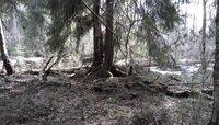 В Калининградской области проснулись первые лесные клещи