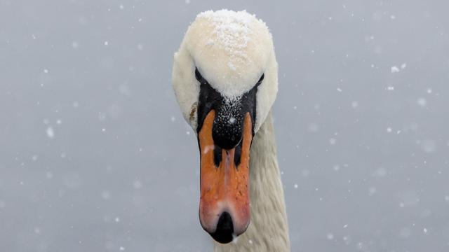 Весенняя зима в парке Южный (фото)