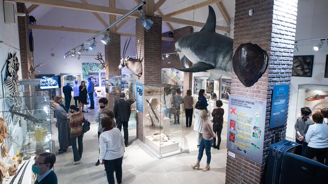 """Сумки из крокодила и пятиметровая акула: в Калининграде открылась выставка """"Сокровища контрабандистов"""" (фото)"""