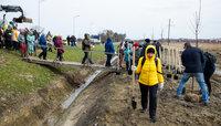 В Гурьевске вдоль улицы Строительной высадили 240 молодых деревьев (фоторепортаж)