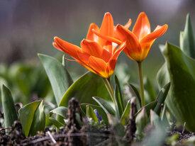 Что цветёт в калининградском Ботаническом саду БФУ им.Канта (фоторепортаж)