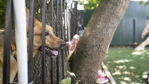 Кинолог объяснил, почему нельзя оставлять собак привязанными у магазинов