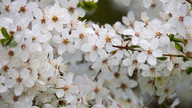Фото дня: немного весны в снежное утро апреля