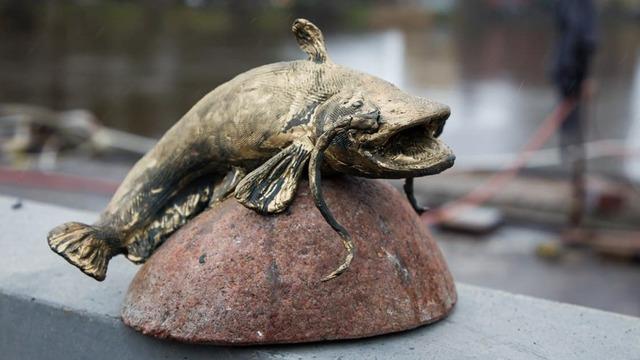 Чем опасна крупная добыча и можно ли съесть сома из Преголи: ихтиолог — об улове калининградских рыбаков