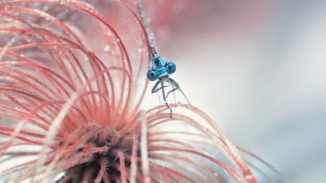 Божьи коровки и муравьишки: фотографии калининградки попали в шорт-лист международного конкурса