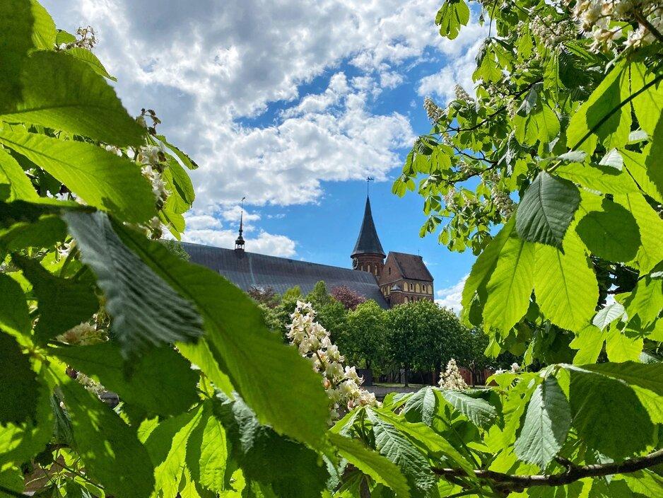 Фото дня: Кафедральный собор из каштановых зарослей