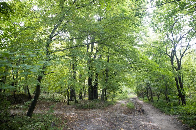 Как выглядит Суздальский лес в Калининграде (фото) - Новости Калининграда | Фото: Александр Подгорчук / «Клопс»