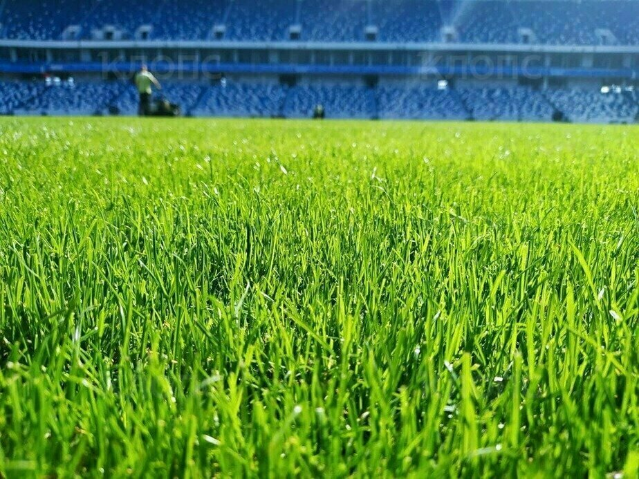 Фото дня: газон на стадионе «Калининград» после замены - Новости Калининграда | Фото: Павел Будников / «Клопс»