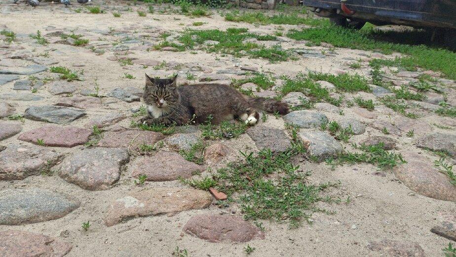 Подкидывают котят и водят туристов: как живёт самый необычный двор в Гвардейске   - Новости Калининграда   Фото: Дарья Волкова