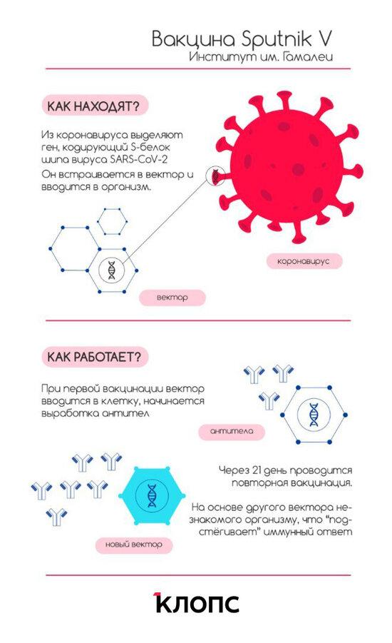Дадут ли больничный и чем второй компонент отличается от первого: 5 наивных вопросов о прививках  - Новости Калининграда