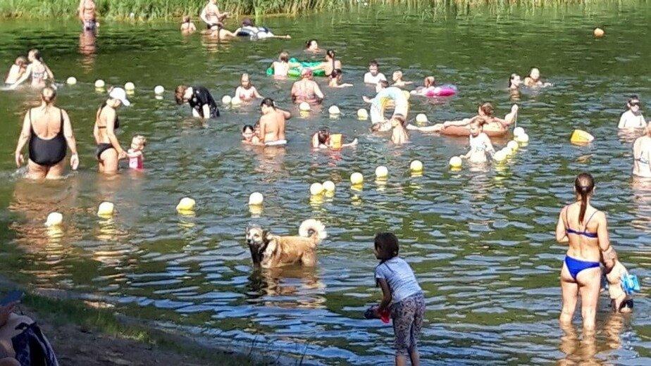 Укусили спасателя и пугают детей: на Голубых озёрах бродят бездомные собаки - Новости Калининграда | Фото очевидца