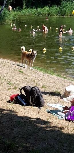 Укусили спасателя и пугают детей: на Голубых озёрах бродят бездомные собаки - Новости Калининграда | Фото очевидцев