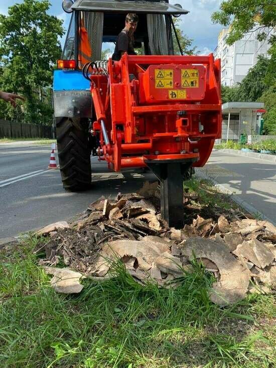 В Калининграде начали выкорчёвывать пни вдоль тротуаров для посадки деревьев - Новости Калининграда | Фото: МБУ «Чистота» / Facebook