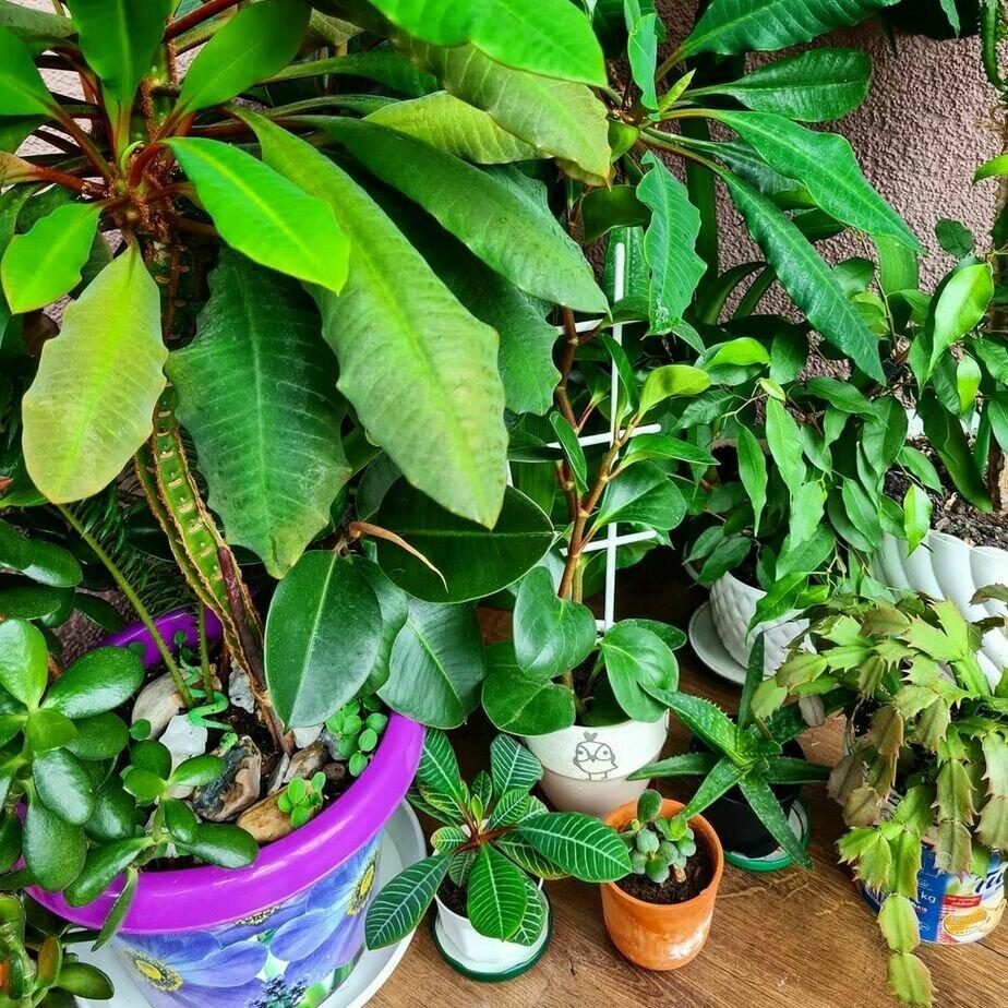 Спасённые Евгением растения   Фото: Женяй Огонь