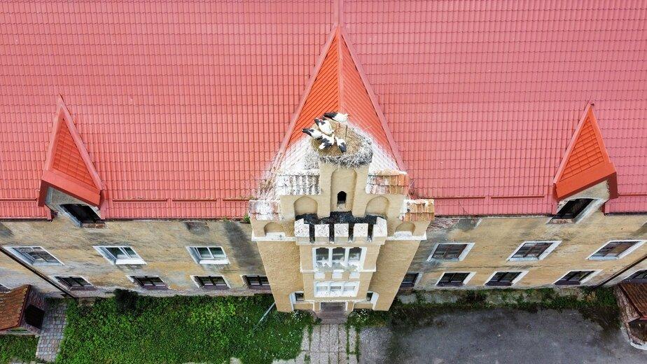 Фото дня: семейство аистов на замке Вальдау - Новости Калининграда