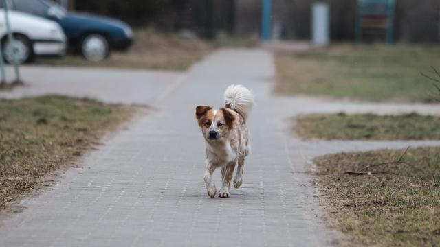Грозилась убить питомцев: что известно о калининградке, вышвырнувшей собаку с пятого этажа