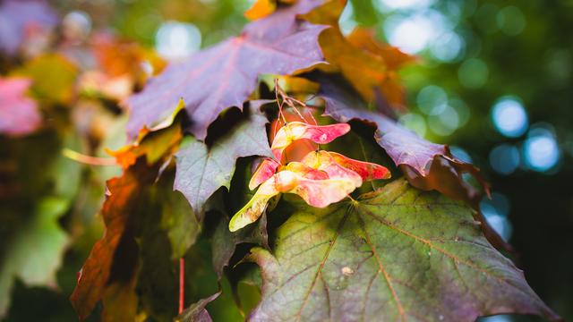 Осень. Начало (фоторепортаж)