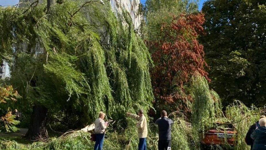 Рухнувшие деревья, аварии и закрытый зоопарк: что натворил ураган в Калининградской области (фото) - Новости Калининграда   Фото: очевидец