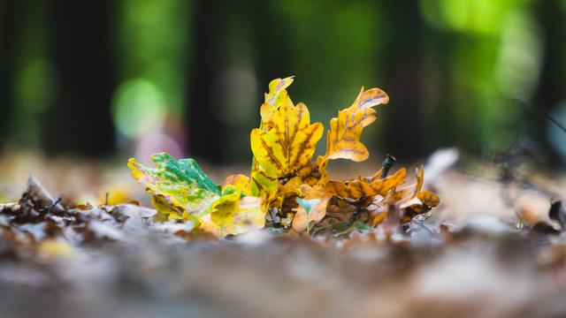Метеоролог рассказал, что калининградцев ждёт второе бабье лето