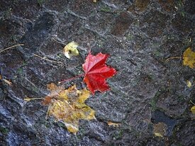 Фото дня: калининградская брусчатка