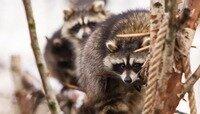 В Калининграде контактный зоопарк могут закрыть после прокурорской проверки