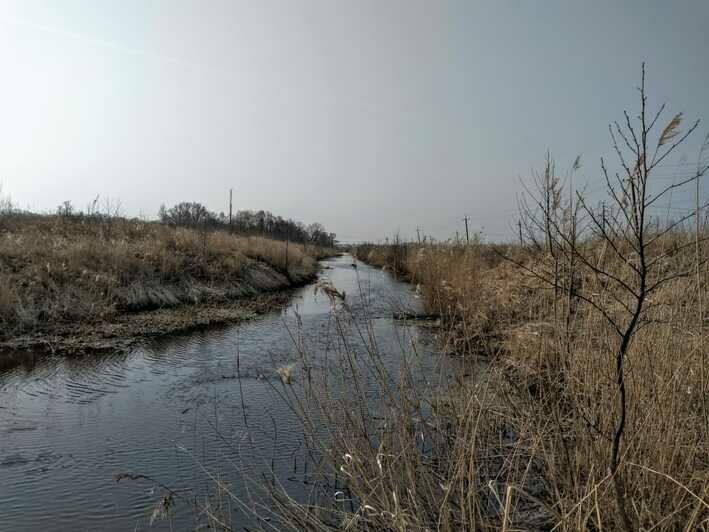 Окрестности поселка Сосновка, река Зеленоградка — место активного обитания луговых клещей.  | Фото: из личного архива Евгения Волчева