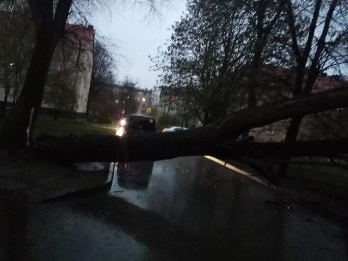 Снег, дождь и поваленные деревья: как бушевала непогода в Калининградской области в воскресенье (видео) - Новости Калининграда   Очевидец