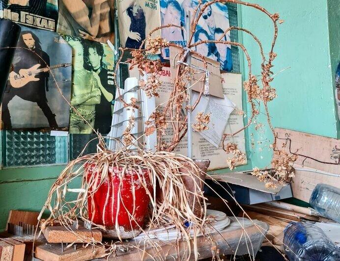 Калининградец спасает растения, оставленные в заброшенных домах  - Новости Калининграда   Фото: Женяй Огонь