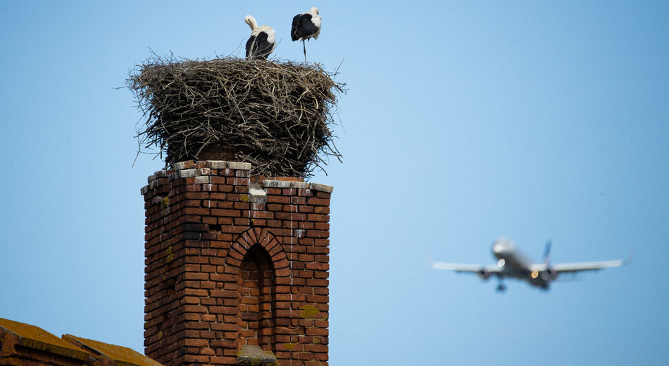 Фото дня: пролетая над гнездом аиста - Новости Калининграда | Фото: Александр Подгорчук / «Клопс»